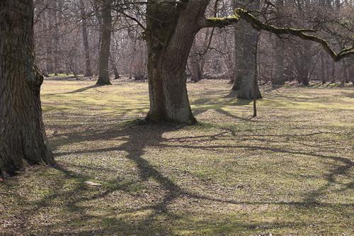 Trädrad