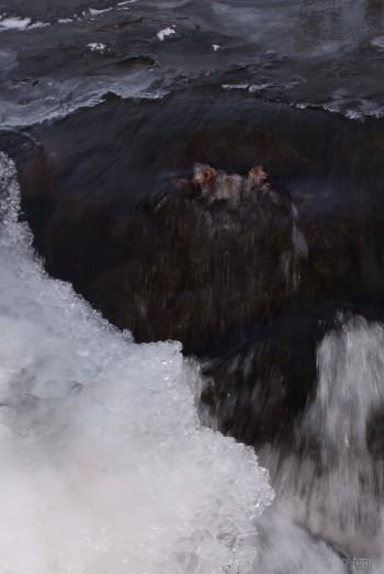 I iskalla vattnet